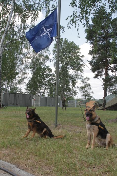 Con la Bandera de la OTAN