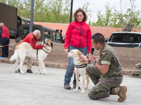 Conocer a...Sargento 1º Bautista 'El emBAUCANdor de perros'