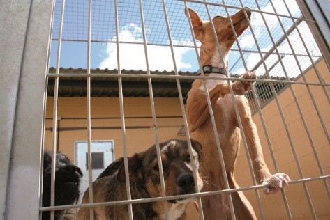 Imagen de animales acogidos por la asociación